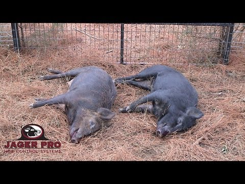 JAGER PRO™ Hog Trapping (20)- Wild Piglet Survival without Sow