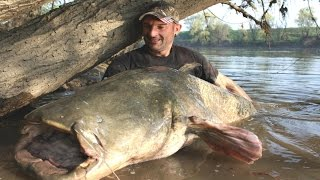 MONSTER CATFISH TALL 8,63 FEET X 250 LBS CAUGHT ON CAMERA by CATFISHING WORLD