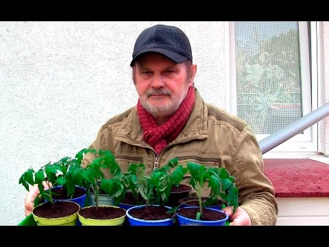 Blüten frösteln, Tomaten warten: APRIL EISKALT!  Film 47