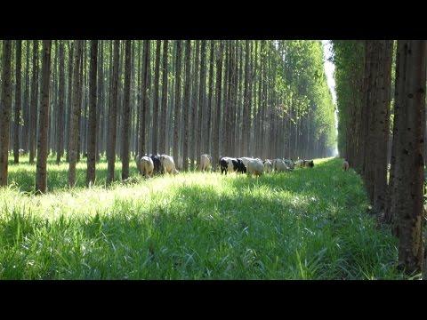 Curso Integração Lavoura, Pecuária e Eucalipto - Plantio em Áreas Planas