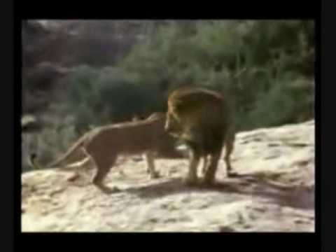 Christian the Lion (My Immortal and I Don