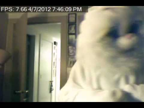 Easter Bunny Caught On My Security Camera