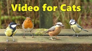 Videos for Cats - 9 Hours of Woodland Birds
