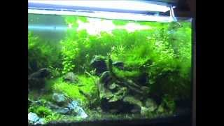 Aquarium 160 L Storm over a mountain stream