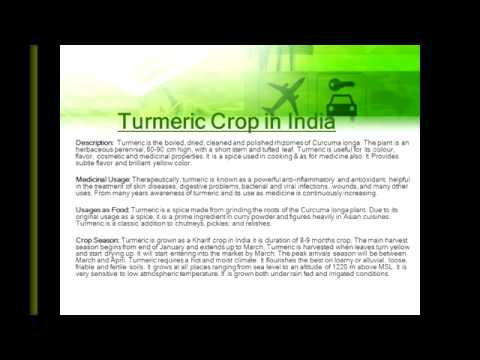 Turmeric Crop in India  Indian Brokers Association
