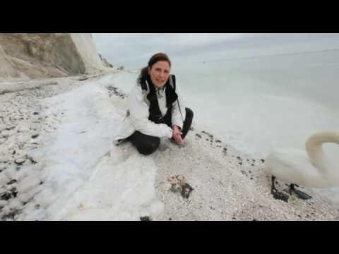 Klint Fossil Møns Klint Fossil Jagt Mp4