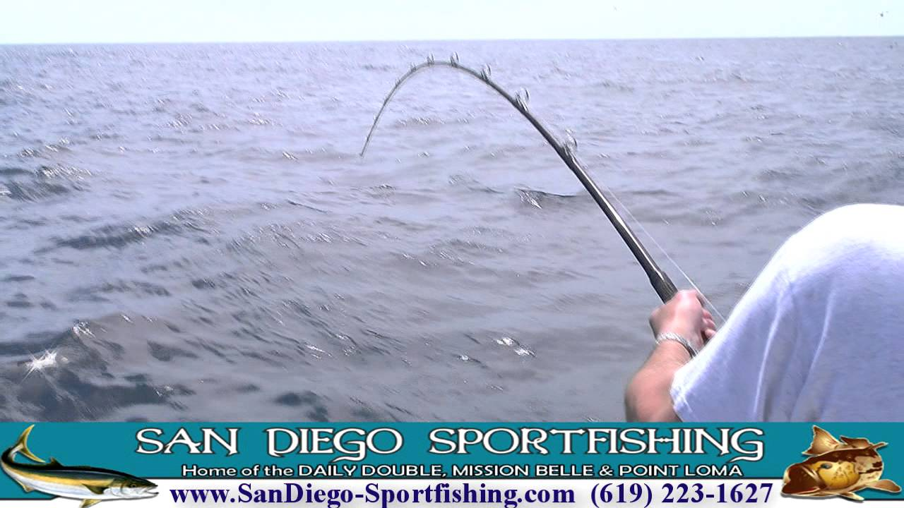 San diego sportfishing mission belle yellowtail video for Point loma landing fish count