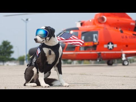 Border Collie Works Full Time Keeping Airport Runways Clear for Planes