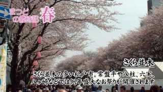 松戸の春 (坂川の河津桜~市内のさくら並木~東松戸ゆいの花公園)