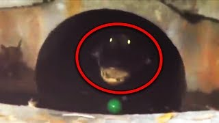 Top 15 Most Scary Videos Caught in Sewers