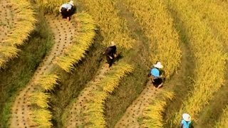 Dazhai (大寨) Fall Harvest - 2005 (China Works Series)