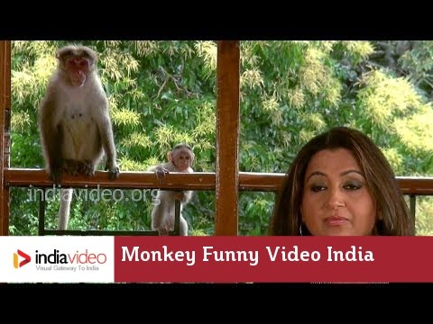 When Monkeys joined the Bollywood Centenary Party