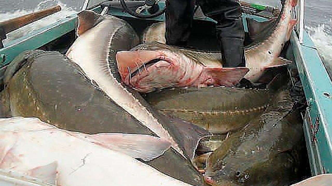как ловят браконьеров каспийского моря видео