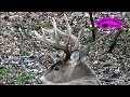 [September 17 Big Whitetail Buck  ONLY on HawgNSonsTV] Video