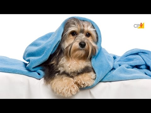 Clique e veja o vídeo Local Para Dormir - Curso a Distância Como Cuidar e Educar o Seu Cão