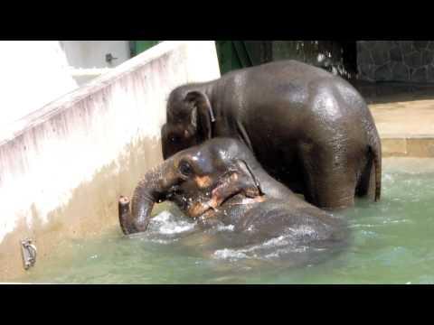 東山動物園ゾウの水浴び44.MOV