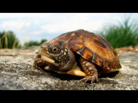 How to Take Care of a Turtle | Pet Turtles