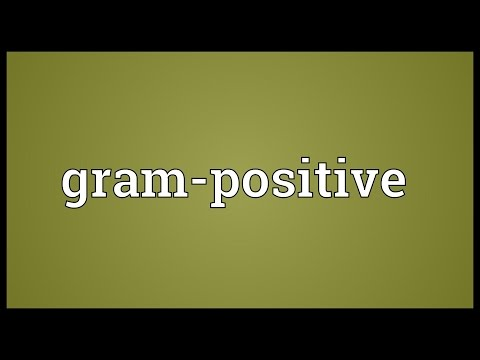 Header of gram-positive
