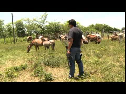 Acción efectiva de la Procuraduría vs abigeato en Macuspana, productores