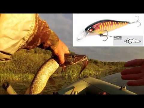 рыбалка на цикаду на мелководье