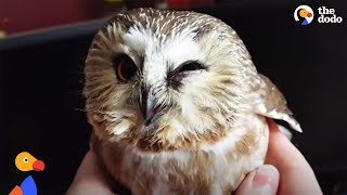 Stunned Owl Flies Into Window and Thanks Family Who Rescues Him | The Dodo