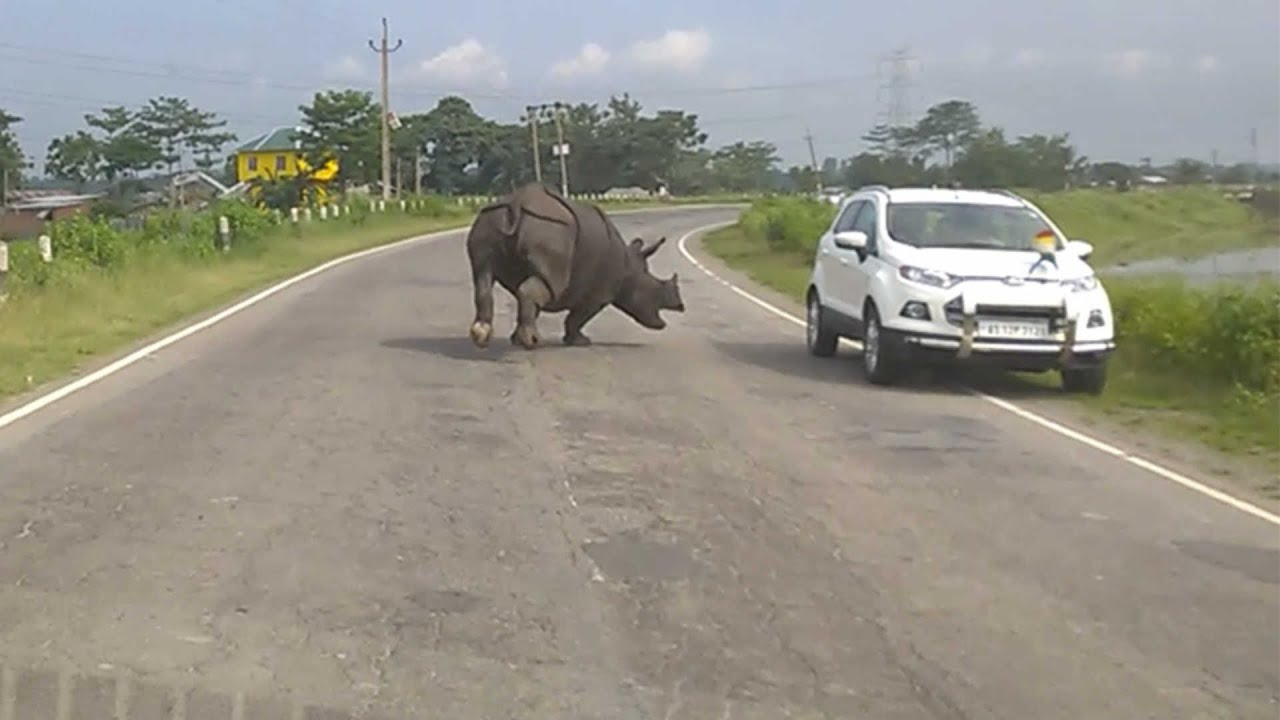 Angry Rhino Charges Down Highway In India