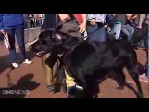 Hundreds protest drug testing on animals
