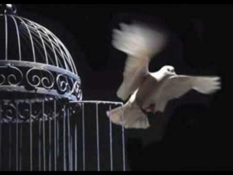 La Jaula de los Osos - Freedom.