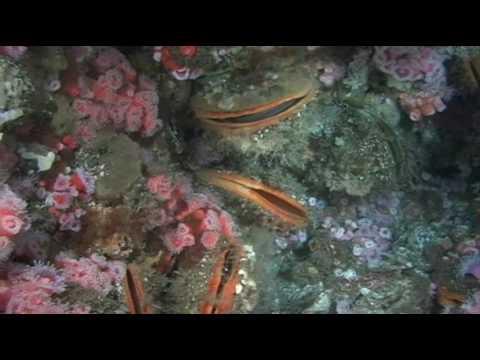 California Diving - Oil Rig diving