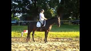 How To Keep Your Lower Legs Anchored so Your Horse Stays Connected in the Transitions #1