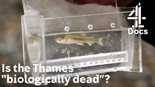 Finding Fish in the Thames and How Artificial Lights May Be Affecting Them
