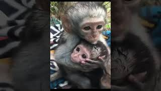 Take care of your loved ones! _heart_ monkeys who are being