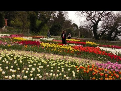 Парад тюльпанов в Ботаническом саду Ялты_2016