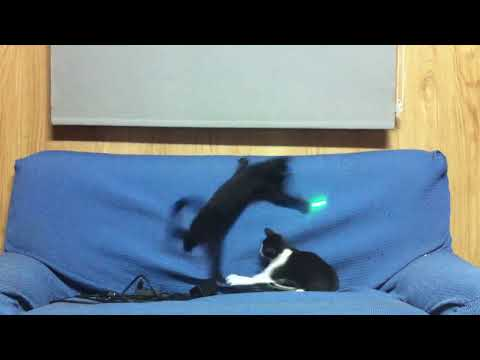 GATOS LOCOS CON PUNTERO LASER . CRAZY CATS WITH LASER POINTER