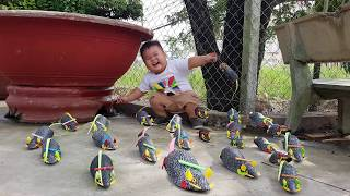 Trò Chơi Săn Con Chuột ❤ ChiChi ToysReview TV ❤ Đồ Chơi Trẻ Em Baby Doli