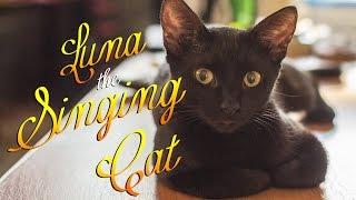 男性と一緒に歌う猫の素敵な映像