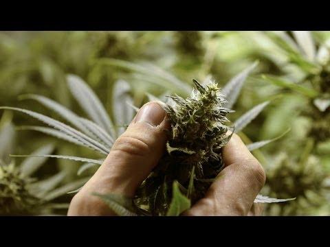 Marijuana Hits Potholes on the Road to Legalization