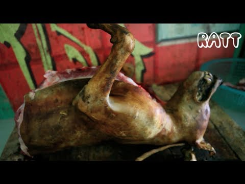 Vietnam Dog Slaughtering: From Pet to Meat