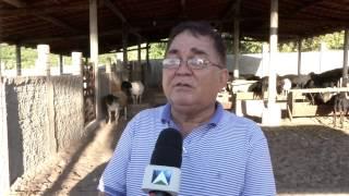 CRIADORES DO PIAUÍ SOFREM COM ROUBOS DE ANIMAIS