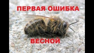 Bees flew in the spring. The first lamentable flight of the family. Lack of feed.