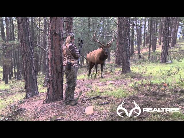 15-Yard Files: Female Bowhunter Stares Down Giant Bull Elk at 4 Yards