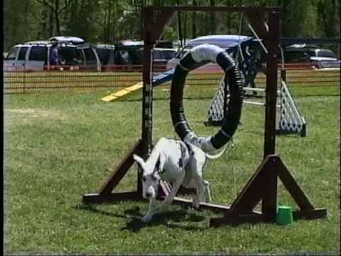 Funniest Dog Agility Bloopers