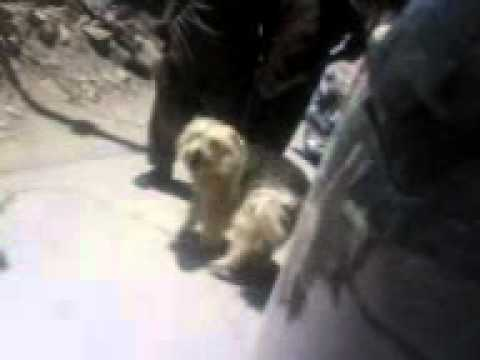 Proxy The Dog.3gp video