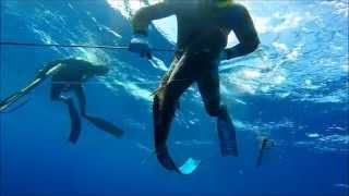 Cobia Season 2015 - Spearfishing with Bull Sharks