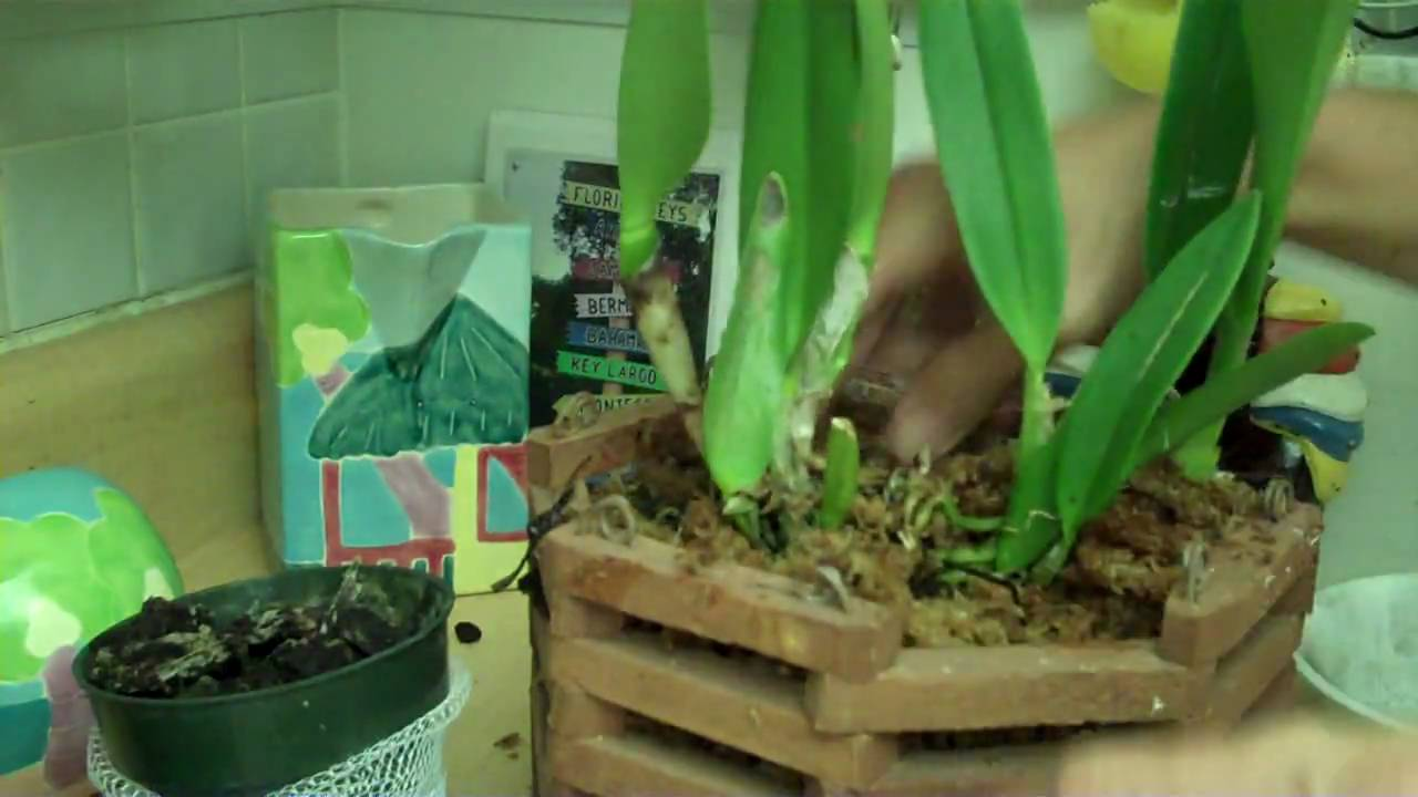 photo How to Repot a Plant