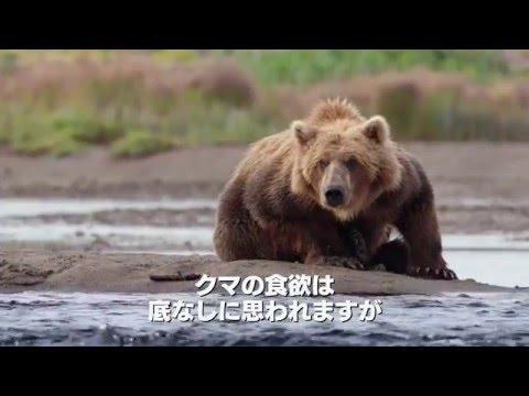 クマの画像 p1_30