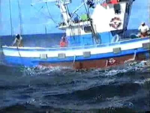 Pesca del Atún con caña