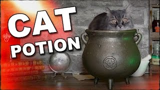 How To Make A Cat Potion