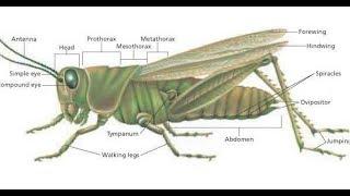 Grasshopper Class-1 (Animal's Identity) 2nd Chapter | Biology-2nd Paper