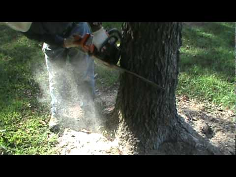 How To Cut Down A Tree With A Chainsaw video